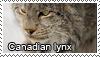 Canadian lynx stamp