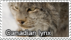 Canadian lynx stamp by Tollerka