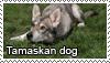 Tamaskan dog stamp