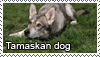 Tamaskan dog stamp by Tollerka