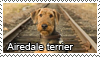 Airedale terrier stamp by Tollerka