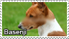 Basenji stamp by Tollerka