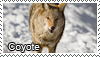 Coyote stamp by Tollerka