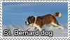 St Bernard dog stamp by Tollerka