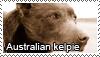 Australian kelpie stamp by Tollerka