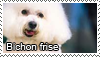 Bichon frise stamp by Tollerka