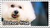 Bichon frise stamp
