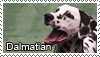 Dalmatian stamp by Tollerka