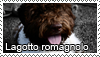Lagotto romagnolo stamp by Tollerka
