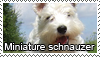Miniature schnauzer stamp by Tollerka