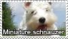 Miniature schnauzer stamp by Tollerka