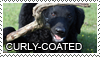 Curly-coated retriever stamp by Tollerka