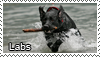 Labrador retriever stamp by Tollerka