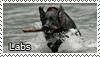 Labrador retriever stamp by Tollerka