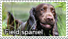 Field spaniel stamp by Tollerka