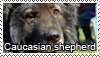 Caucasian shepherd dog stamp by Tollerka