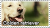 Golden retriever stamp by Tollerka