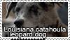 Catahoula cur stamp by Tollerka