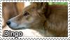 Dingo stamp by Tollerka