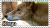 Dingo stamp by Tollerka