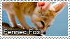 Fennec fox stamp by Tollerka