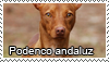 Podenco andaluz stamp by Tollerka