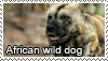 African wild dog stamp by Tollerka