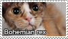 Bohemian rex stamp by Tollerka