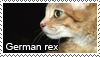 German rex stamp by Tollerka