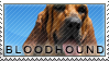 Bloodhound stamp by Tollerka