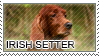 Irish setter stamp by Tollerka