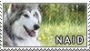 Native Am. Indian dog stamp by Tollerka