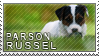 Parson russel terrier stamp by Tollerka