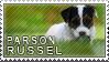 Parson russel terrier stamp by Tollerka
