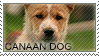 Cannan dog stamp by Tollerka