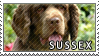 Sussex spaniel stamp by Tollerka