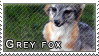 Grey fox stamp by Tollerka