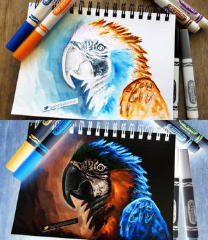 birdy by sambeawesome
