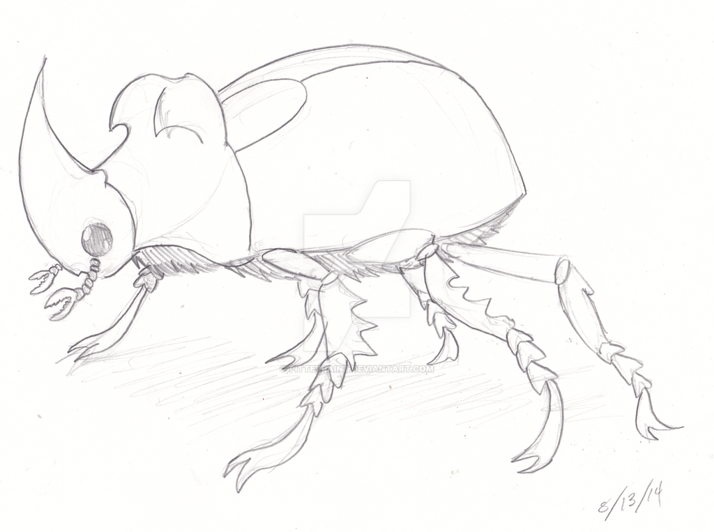 rhinoceros beetle coloring pages - photo#23
