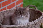 Happy Basket Kitty