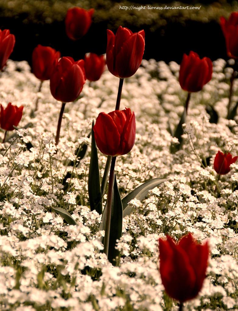 Snow white flowers dream by night lioness on deviantart snow white flowers dream by night lioness mightylinksfo