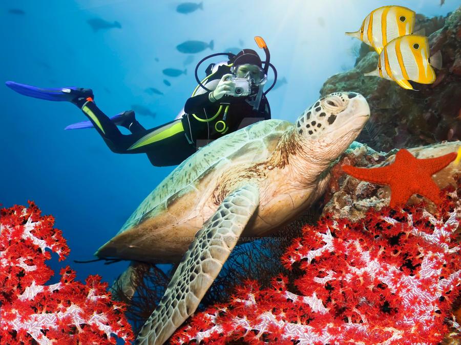 Green turtle underwater II by MotHaiBaPhoto