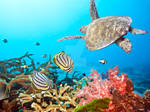 Butterflyfishes and turtle I