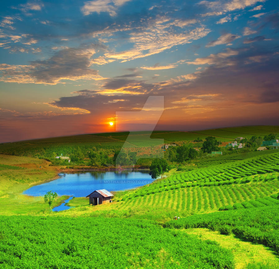 Tea plantation by MotHaiBaPhoto