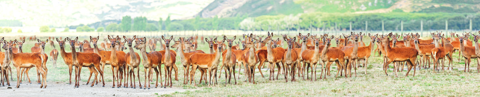 Deers by MotHaiBaPhoto