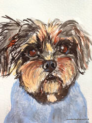 Alfie the terrier cross_1 by JennyJump
