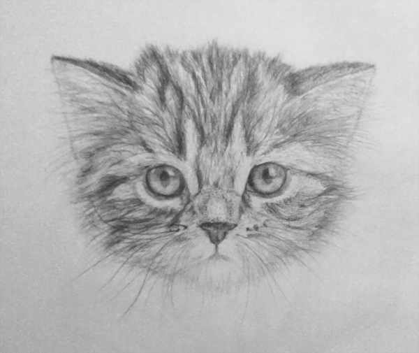 Cat pencil drawing by nelutuinfo
