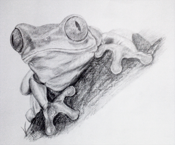Frog pencil drawing by nelutuinfo