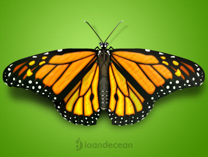 Butterfly - Free PSD