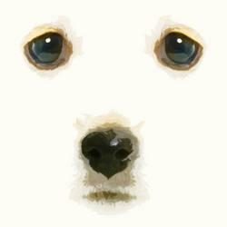 ~PS~ Puppy Eyes